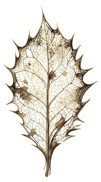 holly-leaf